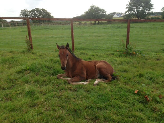 Broodmare and Foal Livery at Avalon Equestrian Larkhall